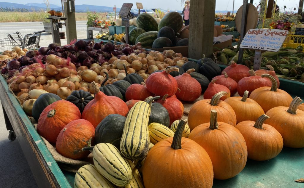 Squash, pumpkins and other gourds at Snow Goose Produce market near Seattle