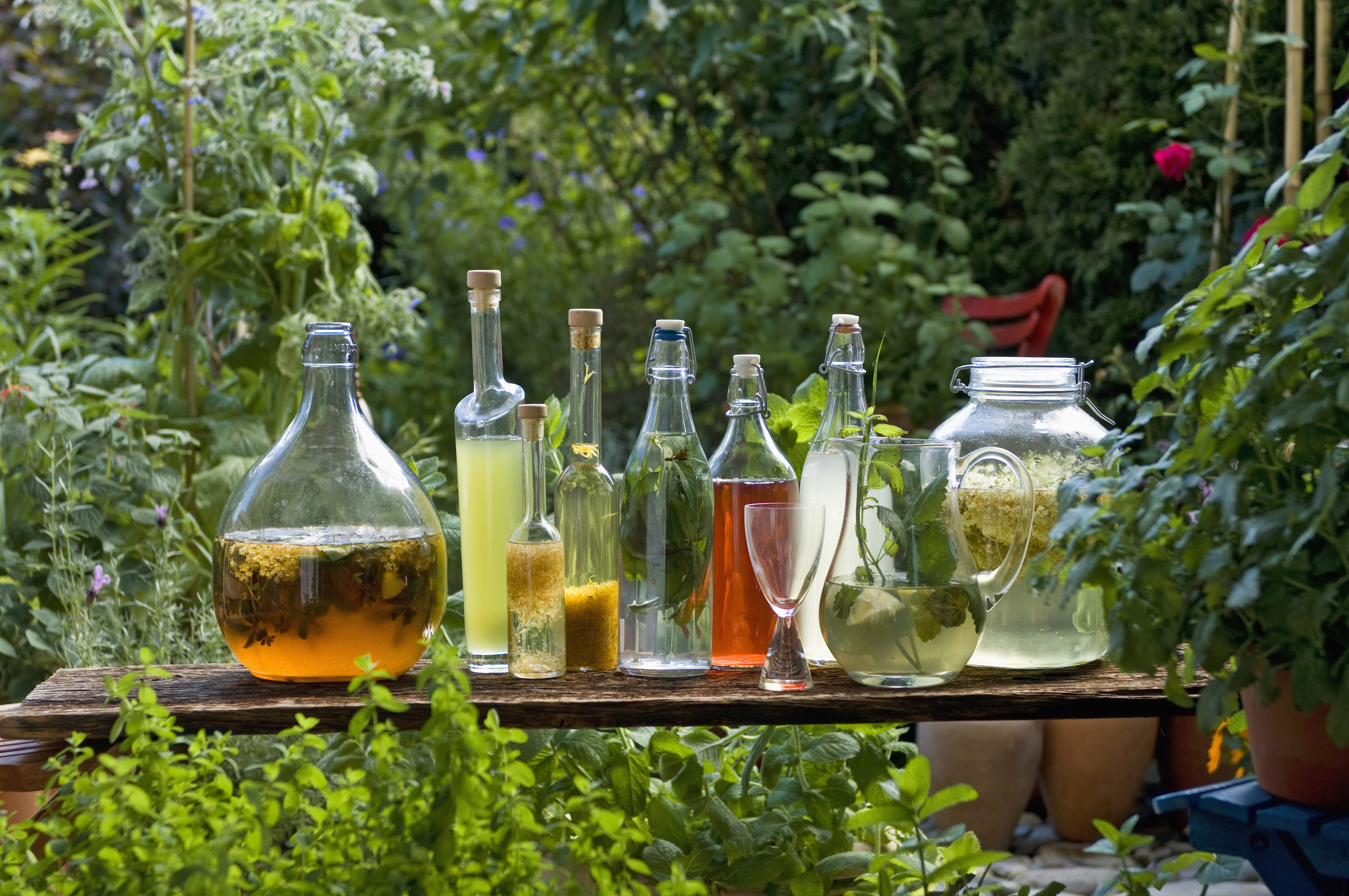 Lemongrass, Mushrooms and Beyond: Plant Your Cocktail Garden Now
